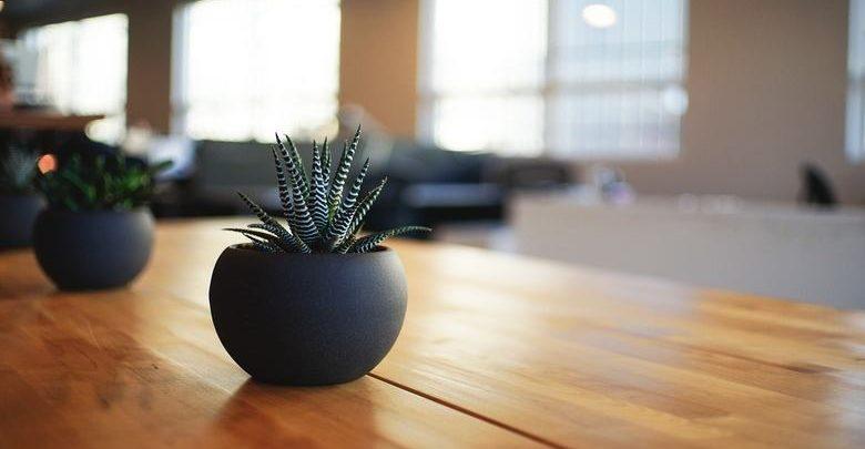 piante-da-appartamento-resistenti-le-più-belle