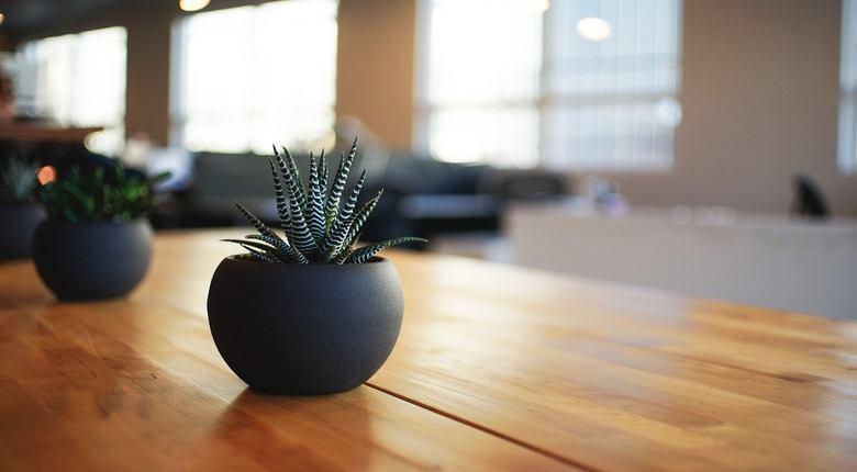 Piante da appartamento resistenti le pi belle blink project - Le piu belle piante da giardino ...