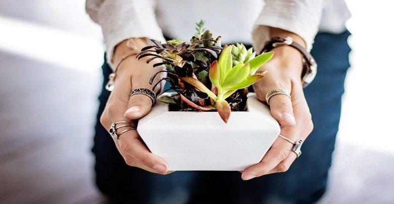 quali-sono-le-piante-grasse-da-appartamento-più-belle