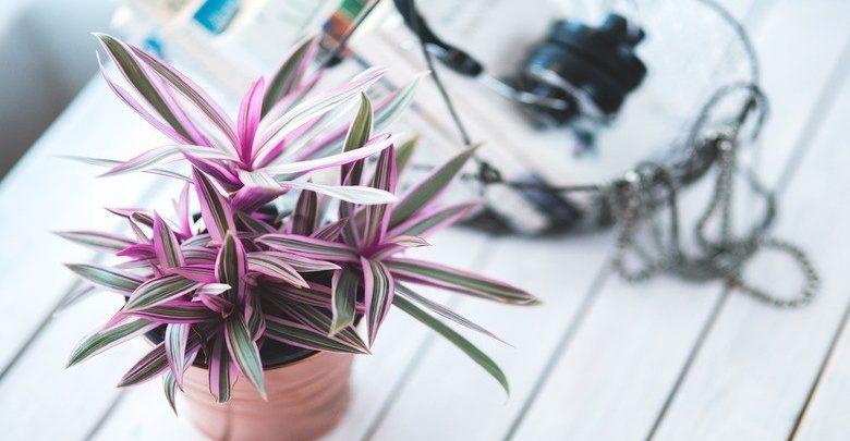 vasi-per-piante-amazon
